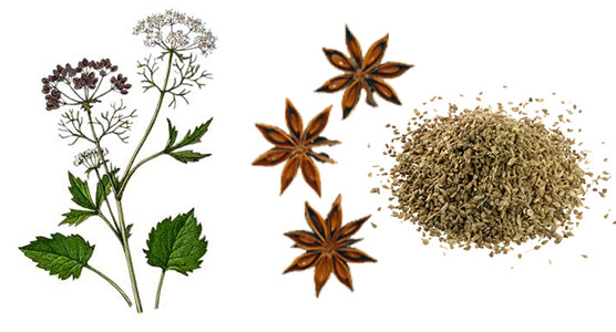 Анис (Pimpinella anisum) Fc03afc3
