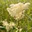 Содержание сайта, магические и лечебные травы, магия ядов, цвета, ароматов